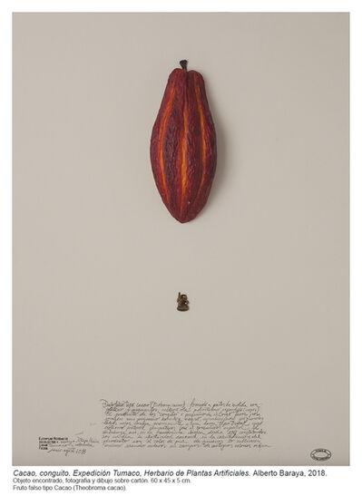 Alberto Baraya, 'Cacao, conguito. Expedición Tumaco (Herbario de Plantas Artificiales)', 2018