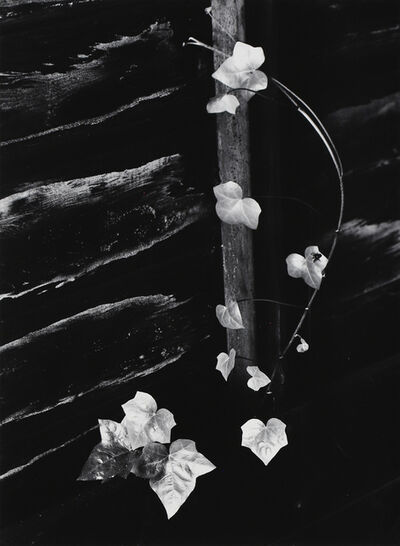 Minor White, 'Ivy, Portland, 1964', 1964