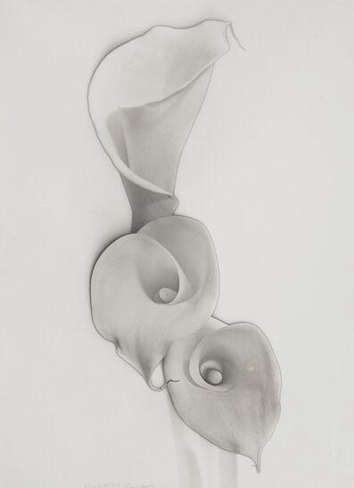 Carlotta Corpron, 'Solarized Calla Lilies', 1948