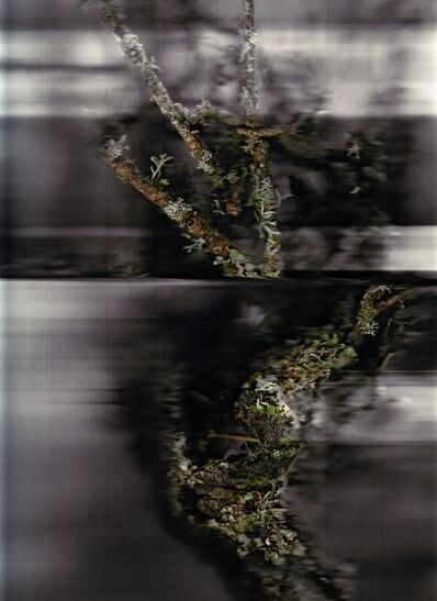 Patrick Beaulieu, 'Poussières de forêt (Révélations) 1', 2009