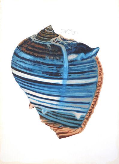 Ray Cicin, 'Albertus Seba Sea Shell'