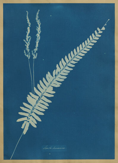Anna Atkins, 'South America, from Cyanotypes of British and Foreign Flowering Plants and Ferns', 1851-1854