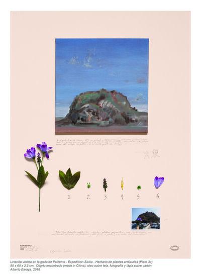 Alberto Baraya, 'Liriecillo violeta en la gruta de Polifemo (Expedición Sicilia, Herbario de plantas artificiales)', 2018