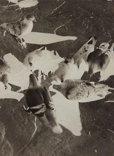 László Moholy-Nagy, 'Untitled (pigeons)', ca. 1925-1930
