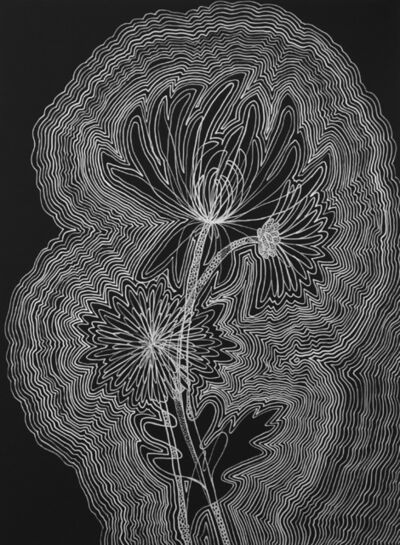 Angela Beloian, 'Chrysanthemum'
