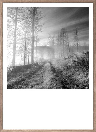 Gregers Heering, 'Into the Mist', 2016
