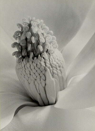 Imogen Cunningham, 'Tower of Jewels', 1925; printed ca. 1950.