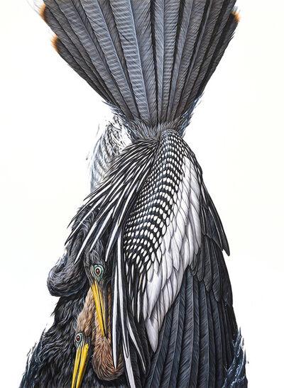 George Boorujy, 'Anhinga', 2017