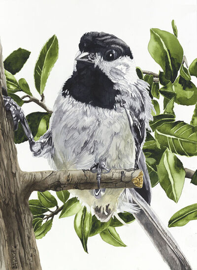 Carol Dawson, 'Chickadee: Toe Hold', 2018