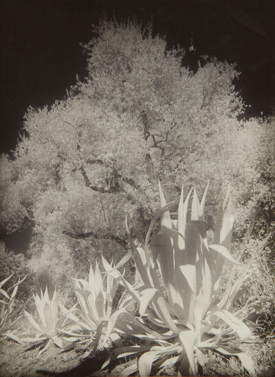 Maurice Tabard, 'Oliviers et Agaves, Infra-Rouge No. II', circa 1934