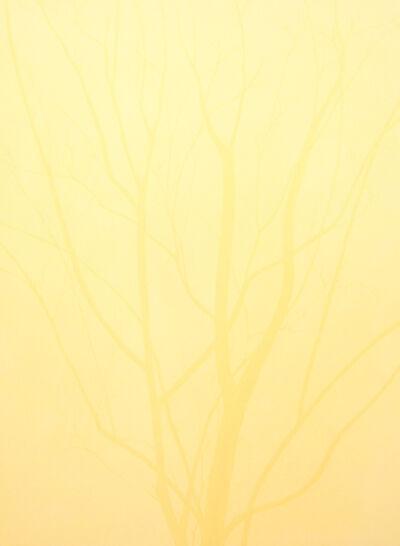 Isabel Bigelow, 'late winter tree', 2016