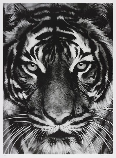 Robert Longo, 'Tiger', 2011