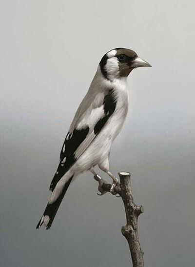 Carsten Höller, 'Birds (#6)', 2006