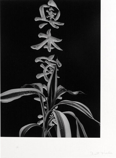 Brett Weston, 'Japanese Funeral Arrangement', 1995