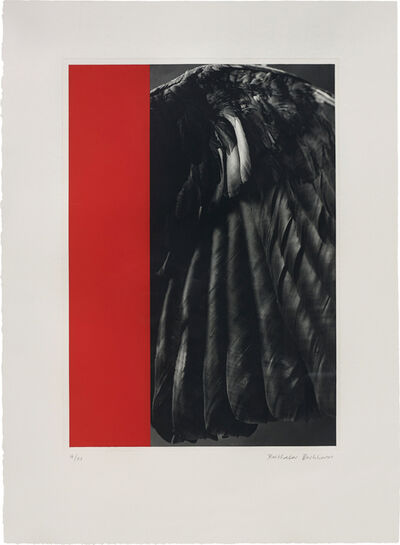 Balthasar Burkhard, 'Crow-Wing and Monochrome', 1988