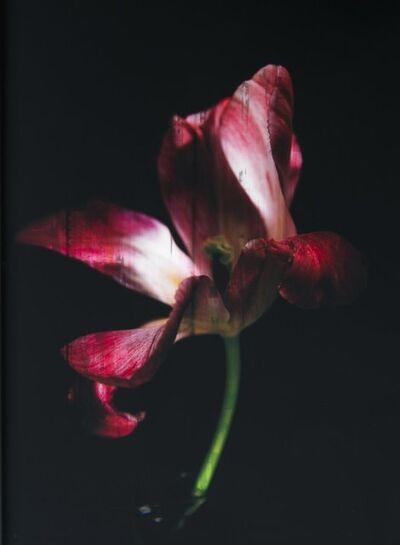 Titus Brein, 'Tulipe Sauvage XL'