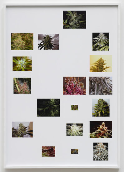 Joachim Koester, 'Dark Sativa Spirit Star', 2014