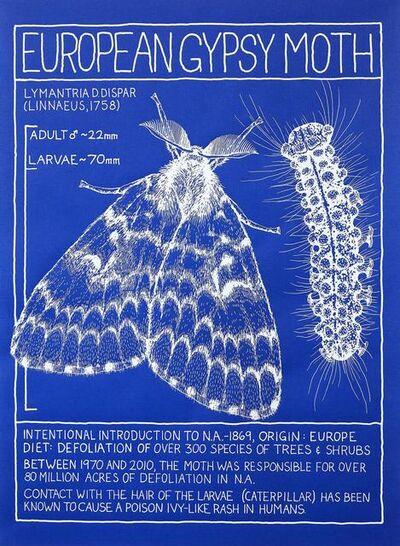 Mark Dion, 'The Life of a Dead Tree — European Gypsy Moth', 2019