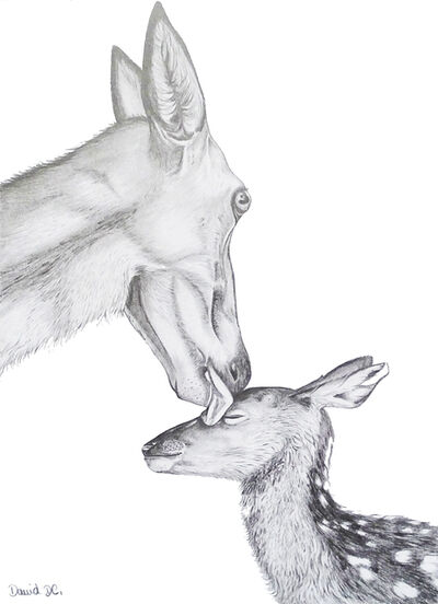 David Da Costa, 'The deer and the fawn.', 2019