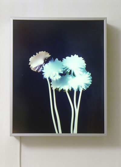 Matt Mullican, 'Untitled (Experiments with Light)', 2001