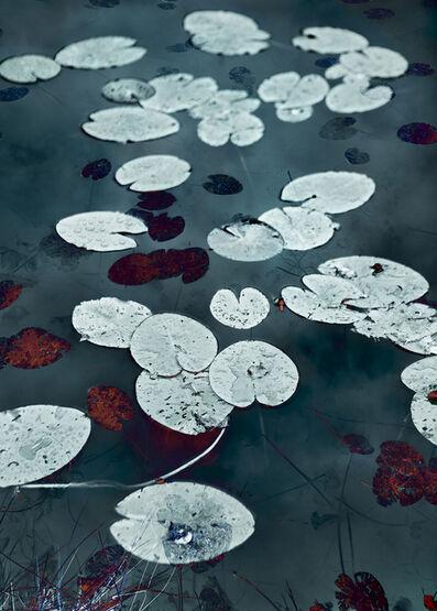 Santeri Tuori, 'Water Lilies 17', 2020