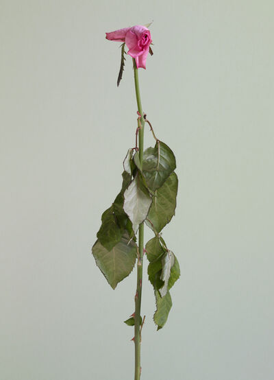 Chung Heeseung, 'Untitled #10 from the series Rose is a rose is a rose', 2016