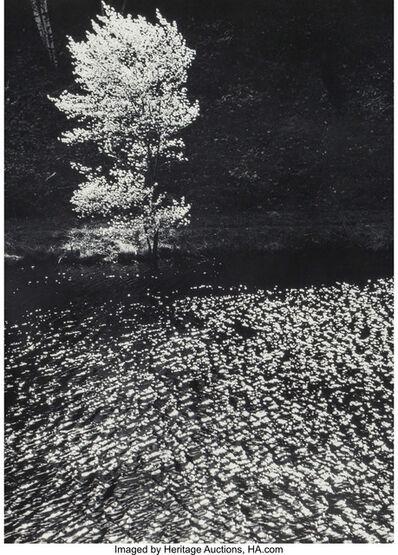 Edward Steichen, 'The Little Shadow Tree in Spring, Connecticut', 1960