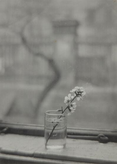 Josef Sudek, 'From the Window of My Studio', 1944-1953