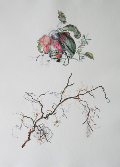 Holly King, 'Botanical Investigation 8', 2011