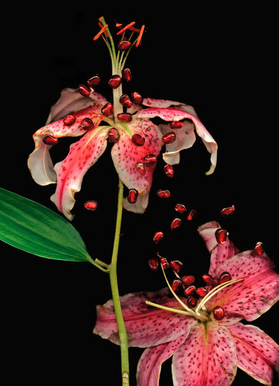 Lisa Frank, ' 1 image Day Lily and Pomegranate Seeds (Modern Digital Print of Pink Flower Still Life)', 2007