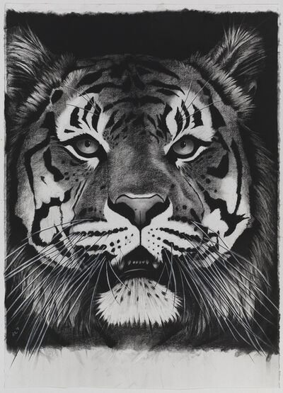 Rose Corcoran, 'Tiger on Black Mouth Open'