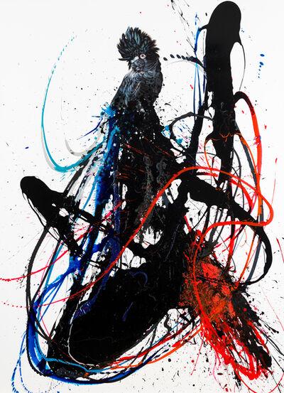Gav Barbey, 'Black Cockatoo'