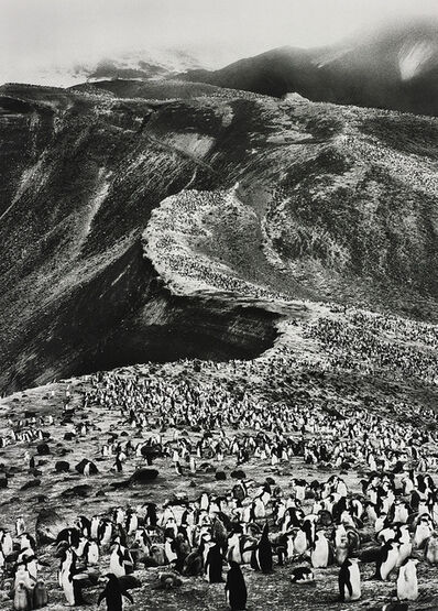 Sebastião Salgado, 'Chinstrap Penguins (Psygoscelis Antarctica), Deception Island, Antarctica', 2005