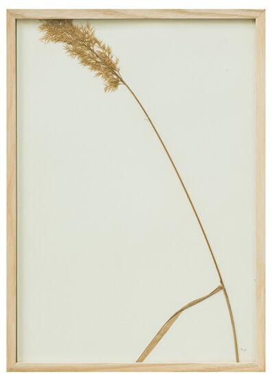 herman de vries, '-part- , no title', 1992