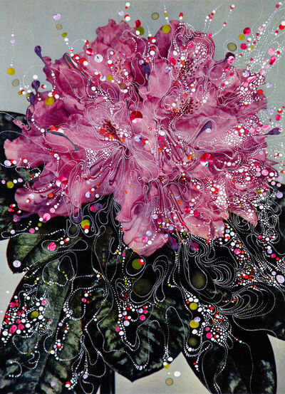Sebastiaan Bremer, 'Rhododendron Hybrid Prinses', 2018