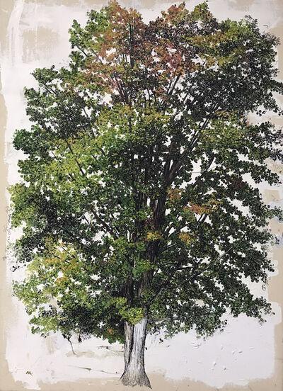 Sarah Myers, 'Oak Tree Fall', 2017