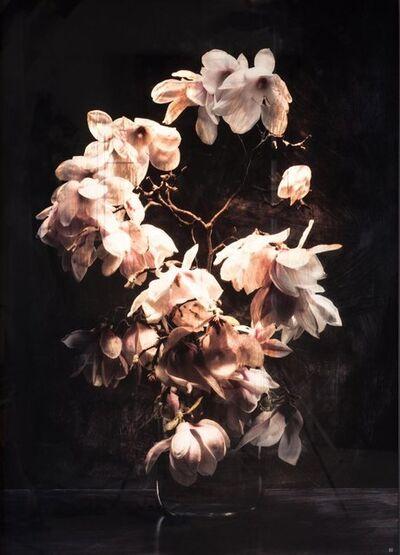 Titus Brein, 'Magnolia Brut Noire '