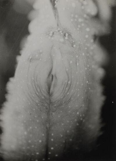 Jean Painlevé, 'Ouverture de la poche incubatrice du mâle Hippocampe', 1931