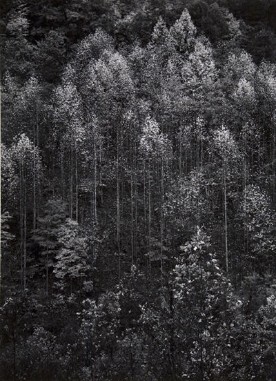 Ansel Adams, 'Dawn Autumn Forest, Great Smoky Mountains National Park, Tennessee', 1948