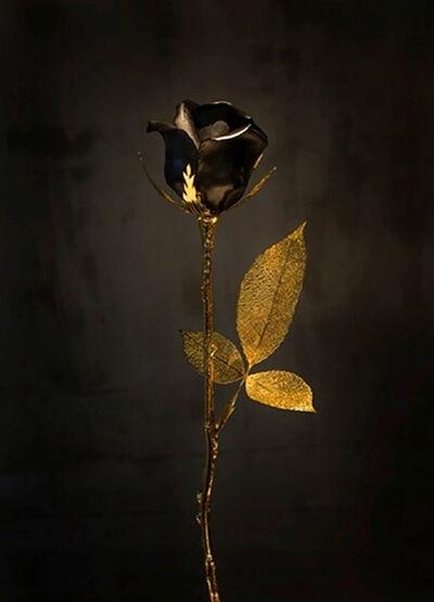 Huang Yulong 黄玉龙, 'Black/Gold Rose玫瑰花 - 金/黑'
