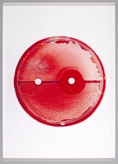 Elva Mulchrone, 'In Red', 2019