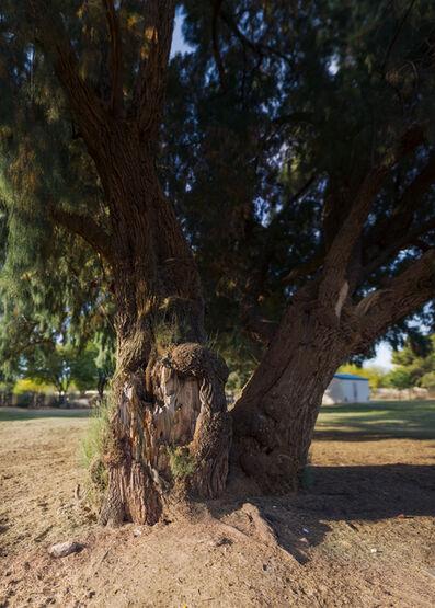 "Richard Rivera, 'Twin Trees Before the Fall I, 67"" high', 2019"