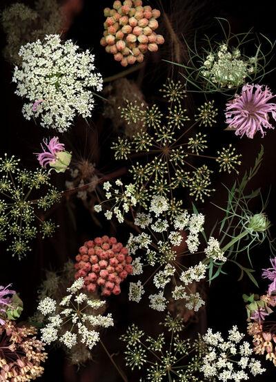 Lisa Frank, 'Milkweed Prairie Still Life (Modern Digital Flora Still Life)', 2007
