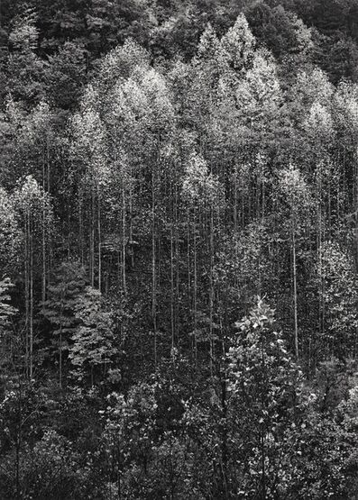 Ansel Adams, ''Dawn, Autumn, Great Smoky Mountains National Park, Tennessee''