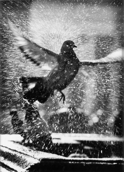Marco Anelli, 'Untitled (dove)', 1995