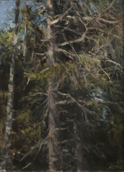 Alexandra Tyng, 'Spruce Trees', 2017