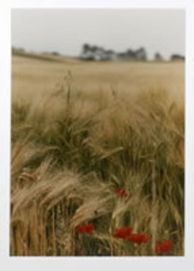 Ralph Gibson, 'Red Poppy Field, Bourgogne'