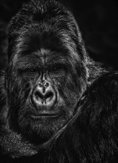 David Yarrow, 'The Thinker', 2020