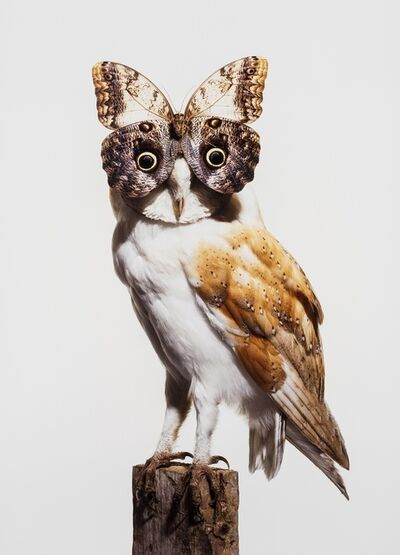 Nancy Fouts, 'Owl with Butterfly', 2012