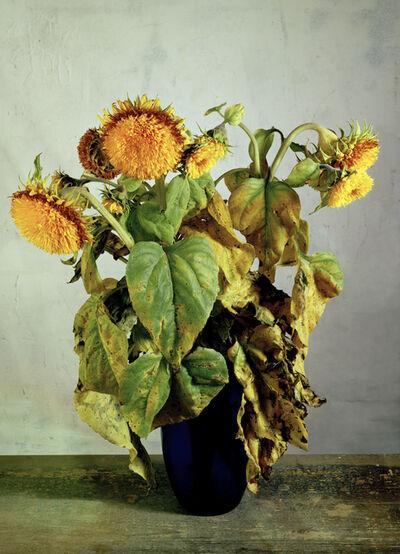 Kris Scholz, 'Flowers 14 | Sonnenblumen verblüht', 1997